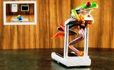 treadmill_frog